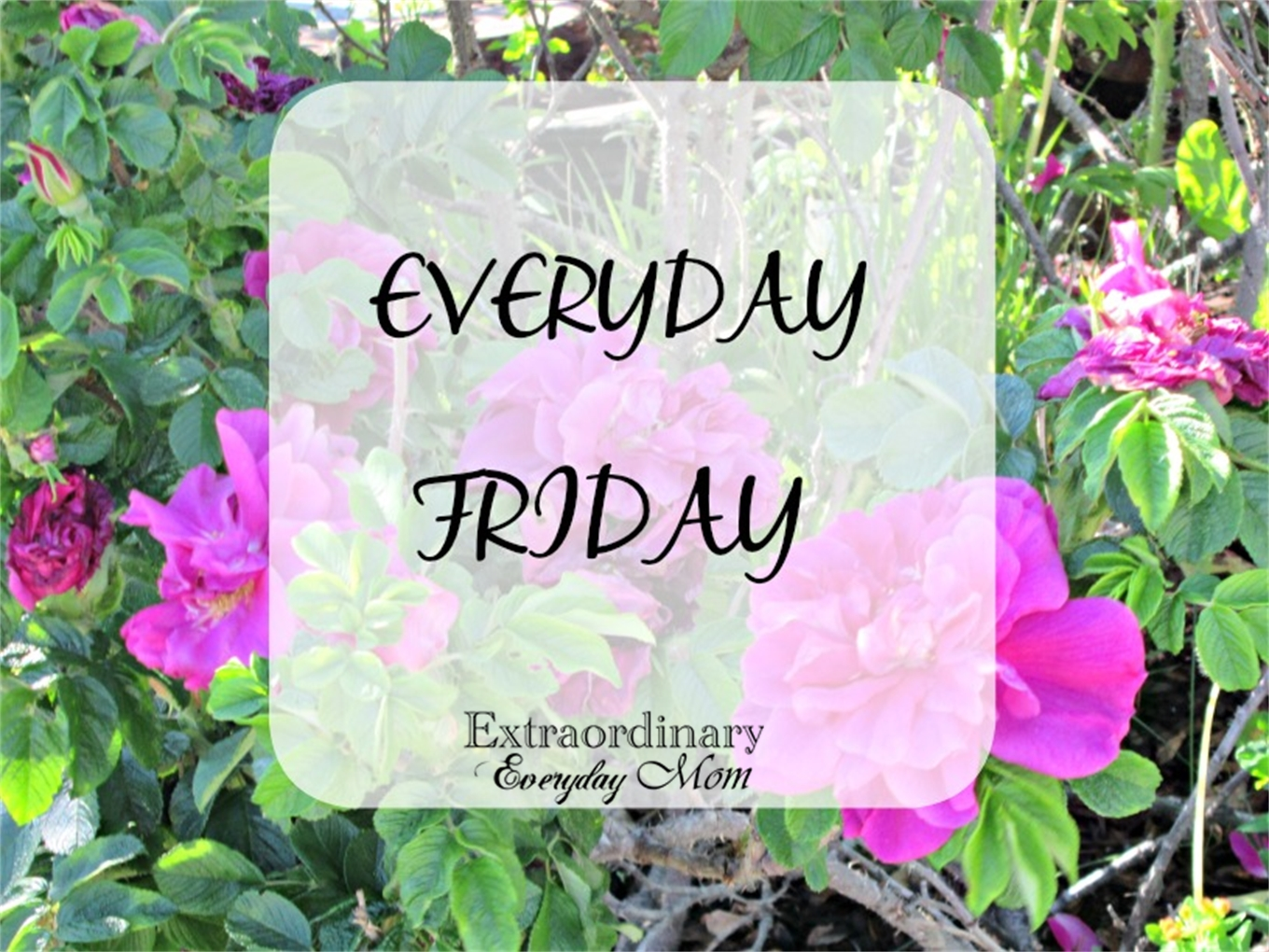 Everyday Friday-The week with gorgeous weather